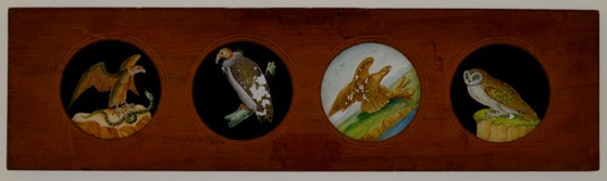 A Copper-Plate Slider by Carpenter & Westley showing elements of Zoology birds condor fulvous vulture golden eagle and barn owl
