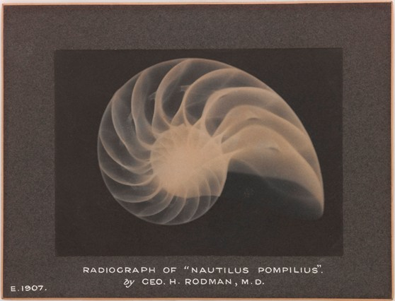 Mounted plantinotype print from 1907 showing an X-ray picture of Nautilus Pompelnes