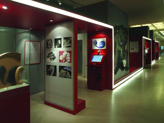 Colour photograph of an exhibition on research focusing mainly on the inner ear and climate change