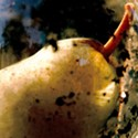 Still image from a colour video showing a pear sitting within a glass container
